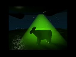 Unsuspecting Cow