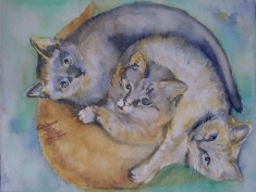 three cats curled up together