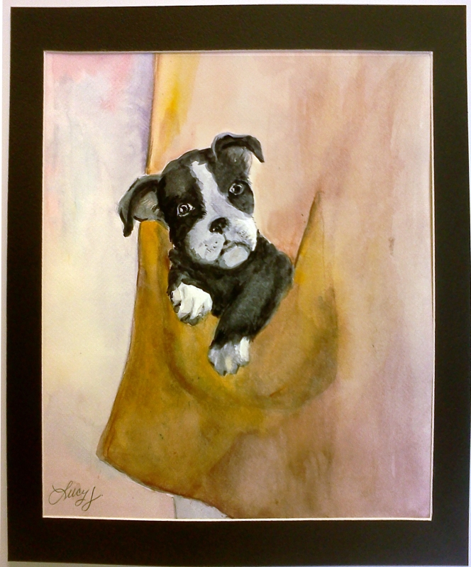 This little boston terrier pup fits in a jacket pocket.