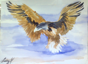Hawk watercolor sketch