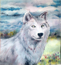 """Watercolor Painting 10x10"""" This light grey wolf has white eyes, a white face, and some highlights of blue-grey and brown in her fur. The field has bright patches and colorful clumps of wiildflowers. At the far end of the field is the beginning of a forest of mixed hardwood trees. The sky is brightly lit, but full of broken cloud banks that show a deep blue behind."""