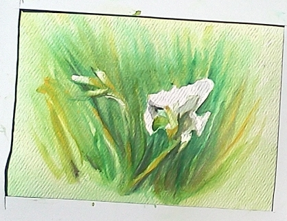 Plein Air Watercolor on card of White Lilies in my Front Garden