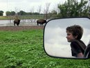 Buffaloes at SWR with Pickup Mirror EEE