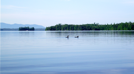 Maine Loons from canoe