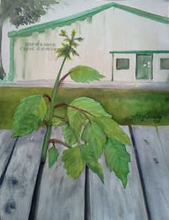 Watercolor, plein aire painting, of a sapling growing up through the weathered boards of a smalltown bandstand.