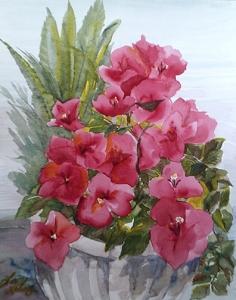 Bougainvillea Reds