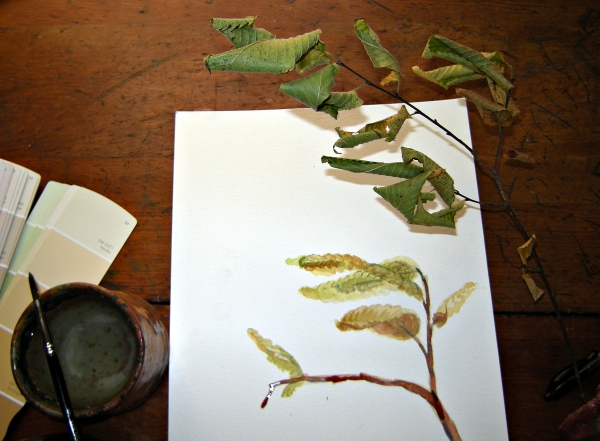 Sketch Curled leaves